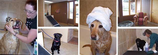 Dog Washing is now offered